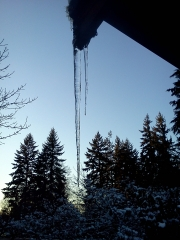 IcicleTrees