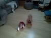 wpid-IMG_20110302_094528